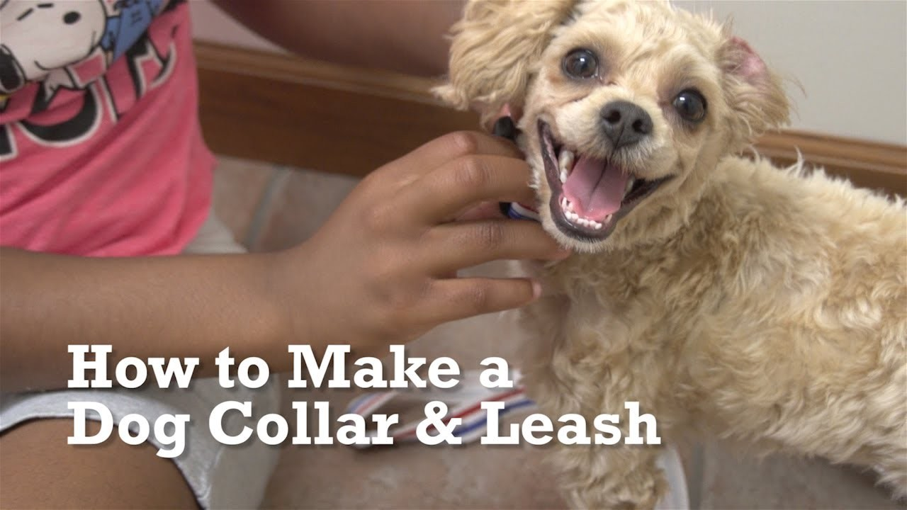 How to Make a Dog Collar & Leash