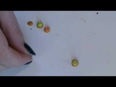 1.12th Scale Dollhouse Miniature Apples and Caramel Apples Part 2