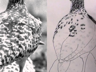 How to draw a spotted thick knee bird in pen & ink