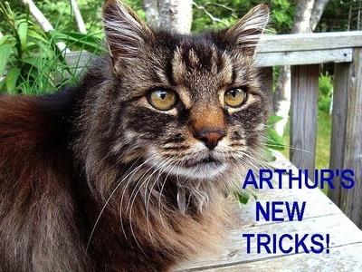 ARTHUR'S new tricks.  funny kitty, cat tricks, funny animals