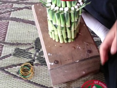 How to make Draceana Lucky Bamboo
