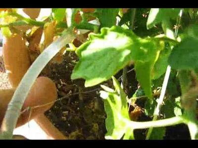 Drip Irrigation System for less than 10 bucks