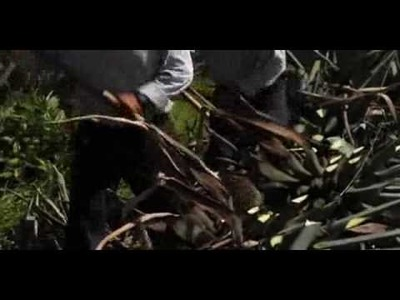 Patron Tequila How It Is Made