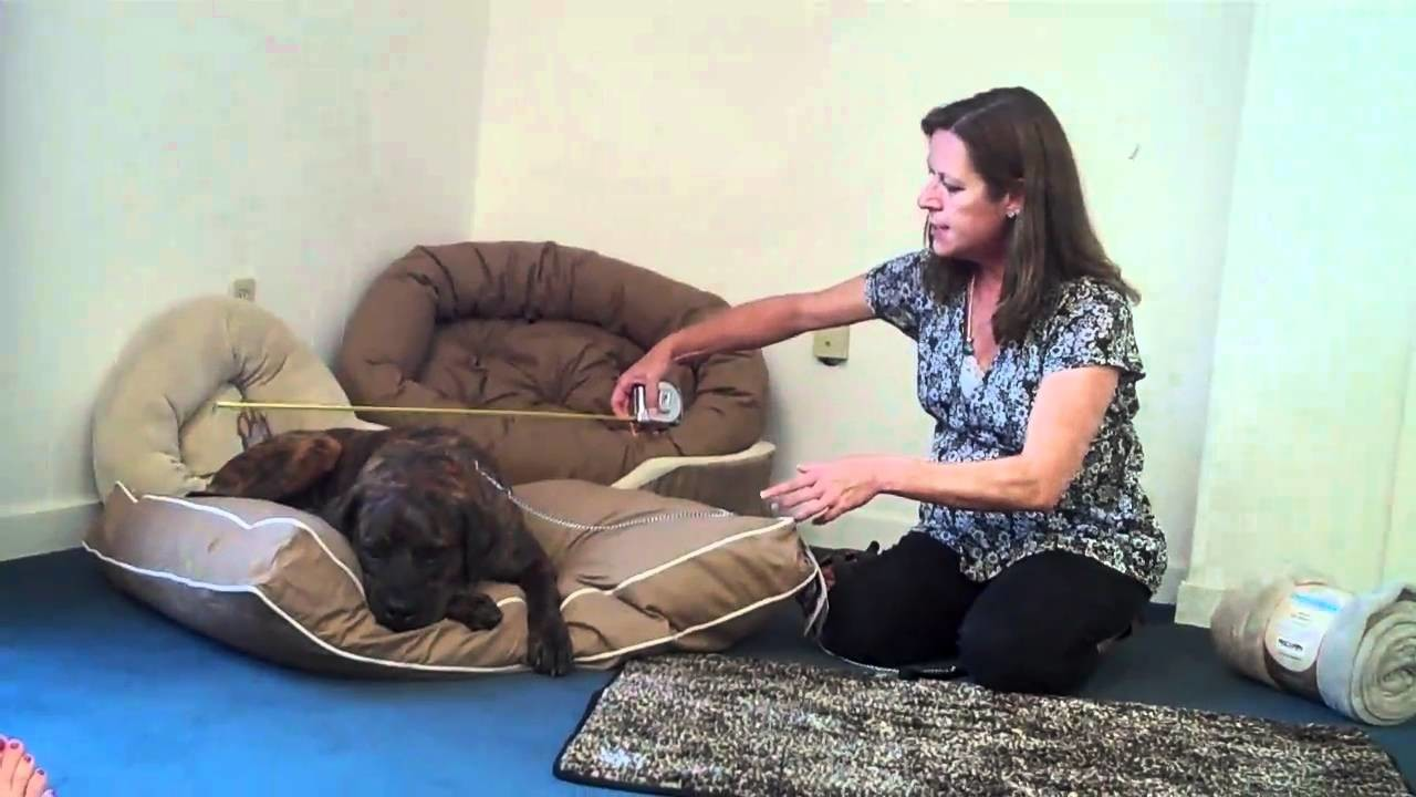 Selecting the Right Bed for Your Dog