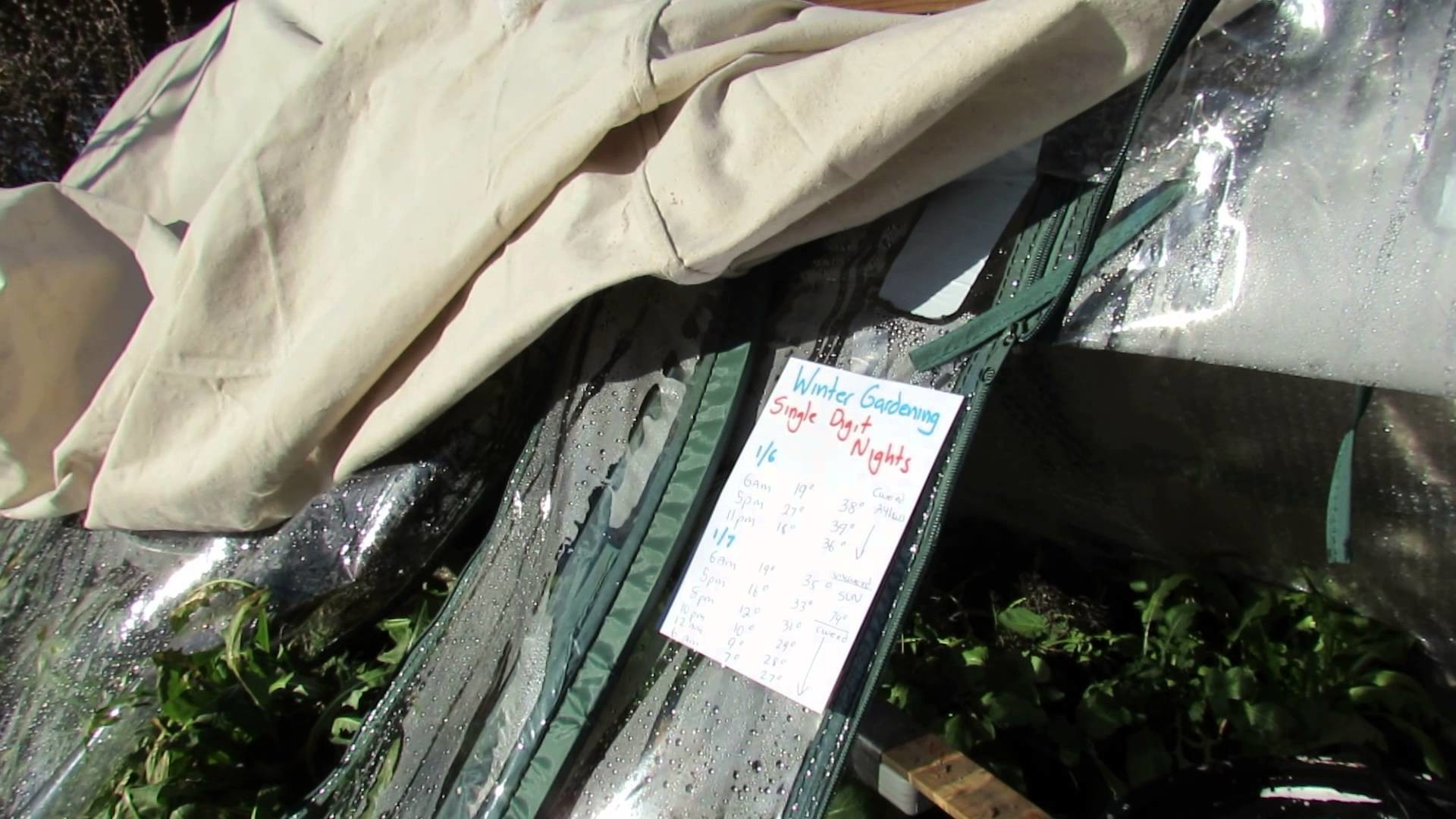Covering a Pop-Up Greenhouse with Painter's Canvas.Blanket: An 8-10 Degree Difference - TRG 2015