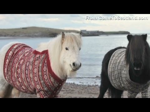 How do you get a pony into a sweater?