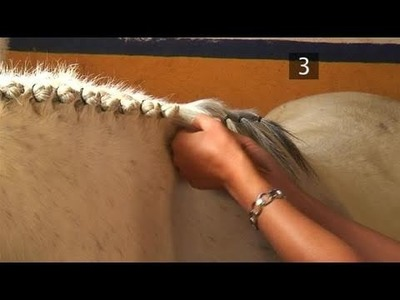 How To Braid A Horse's Mane