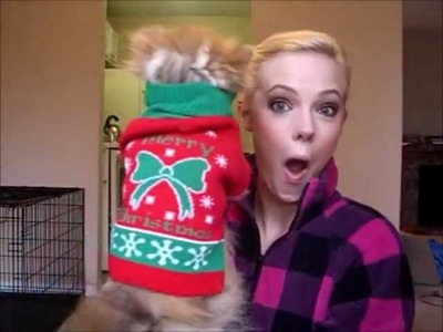 How to Put a Fluffy Dog in a Christmas Sweater