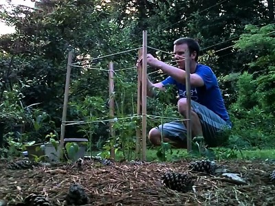How to Make a Cheap Tomato Cage. Trellis