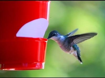 How to make a cheap hummingbird feeder
