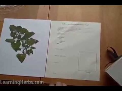 How to Make an Herb Press and an Herbarium, Part 2