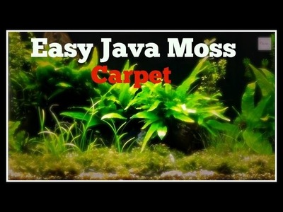 HOW TO CREATE AN INSTANT JAVA MOSS CARPET