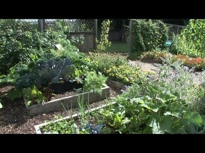 How To Plant Vegetables At Your Garden