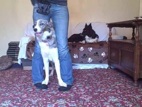 Dog trick tutorial - your feet on mine