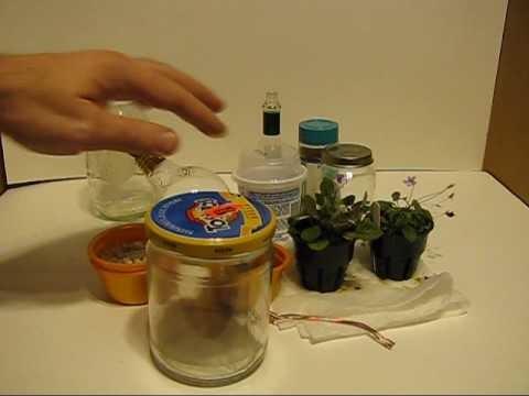 How to make a Micro Terrarium