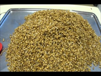 Malting wheat at home