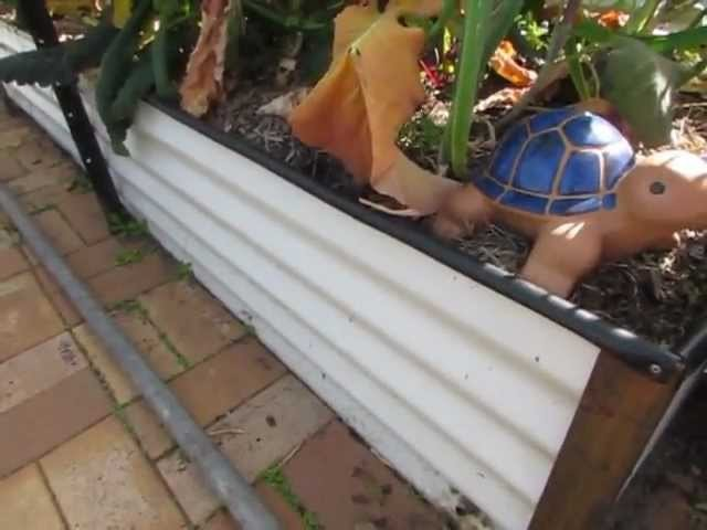 Wicking bed how to.  A self watering garden bed.