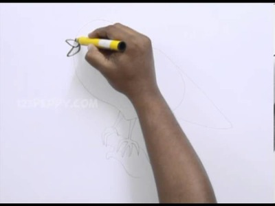 How to Draw a Songbird