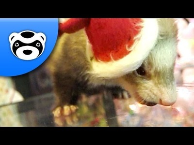 How to Dress a Ferret for Christmas