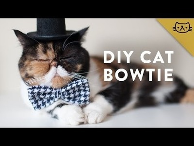 How to Make a Cat Bowtie