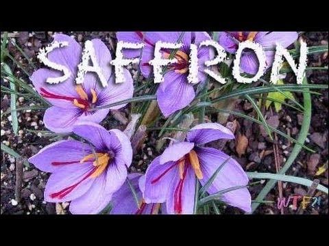 What Is Saffron?. How to Make Saffron Oatmeal Recipe