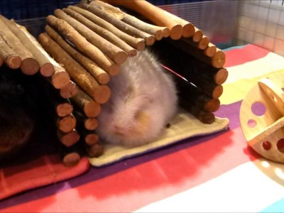 Tips for Keeping your Indoor and Outdoor Guinea Pigs Warm in Winter!