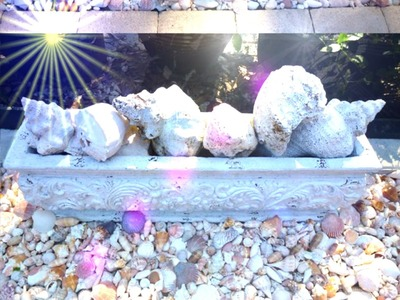 Using Sea Shells for Decoration and Creation