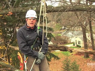 How to Properly Prune Your Trees