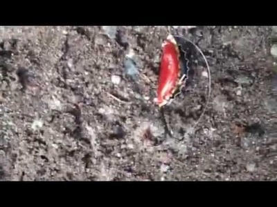 How to Make a Bottle Cap Fish Lure