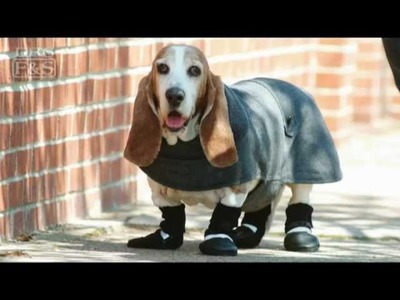 How to Measure Your Dog for Clothing | DrsFosterSmith.com