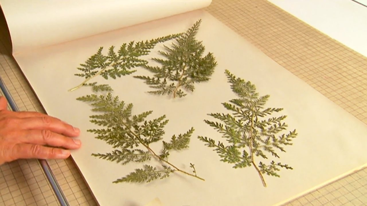 How to Press Leaves | P. Allen Smith Classics