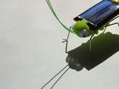 Solar grasshopper on paper
