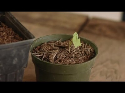 How to Germinate Morning Glory Seeds : Plant & Flower Care