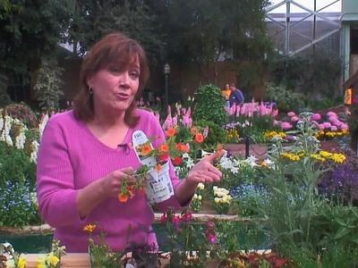 How to Design a Flower Garden - Food & Home - ModernMom