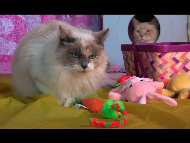 How to Make An Easter Basket for Cats - Furball Fables