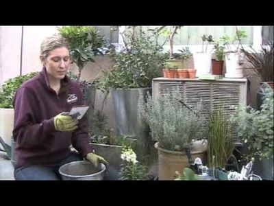 Vlog 3: Review of P. Allen Smith's Container Gardening Deck