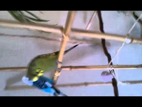 Making Bird Perches