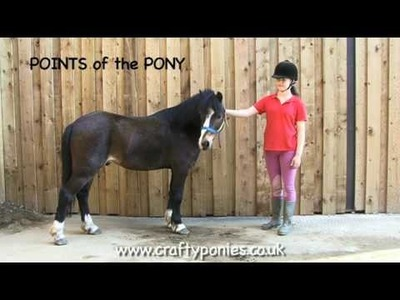PONY LESSONS: Points of a Pony