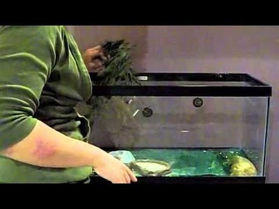 How to Clean Your Gecko's Tank