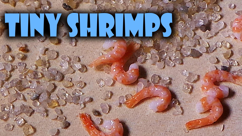 Quick Tutorial; Miniature Shrimps - Polymer Clay