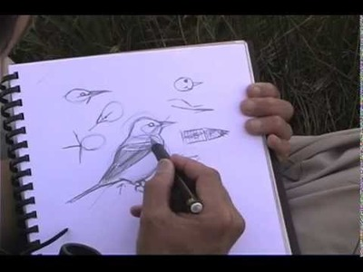 How to Sketch Birds