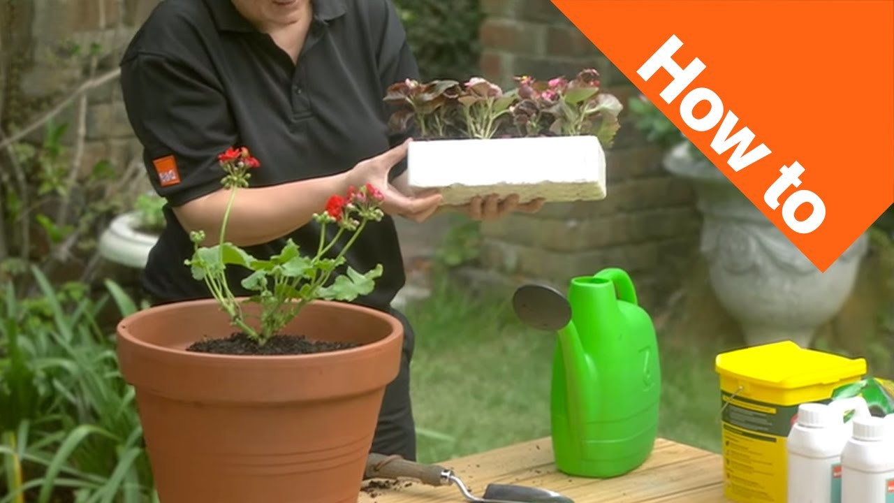 How to Grow Bedding Plants