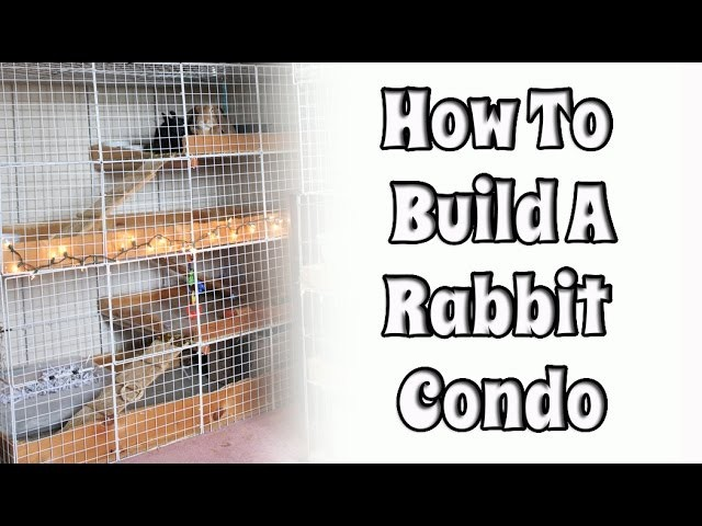 BudgetBunny: How To Build Your Own NIC Rabbit Condo