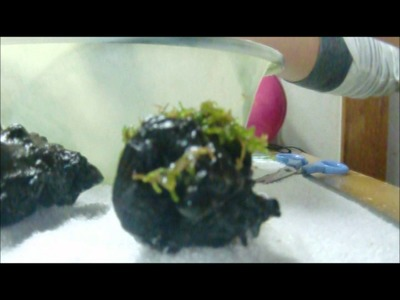 How to attach moss to driftwood