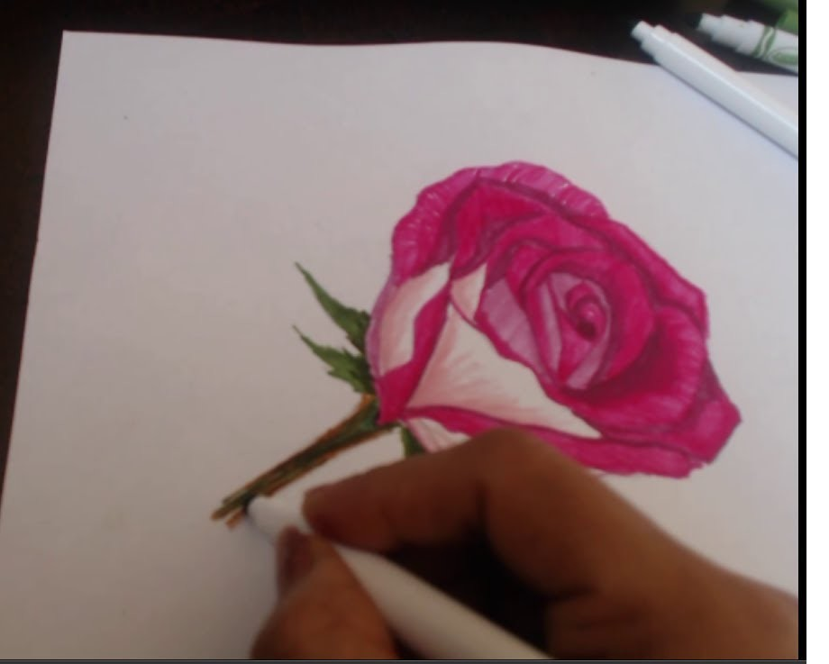 How To Draw A Rose On Paper With Color Pens Sorry No Music