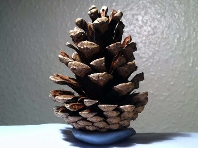 Pine Cone Opening 24 Hour Time Lapse