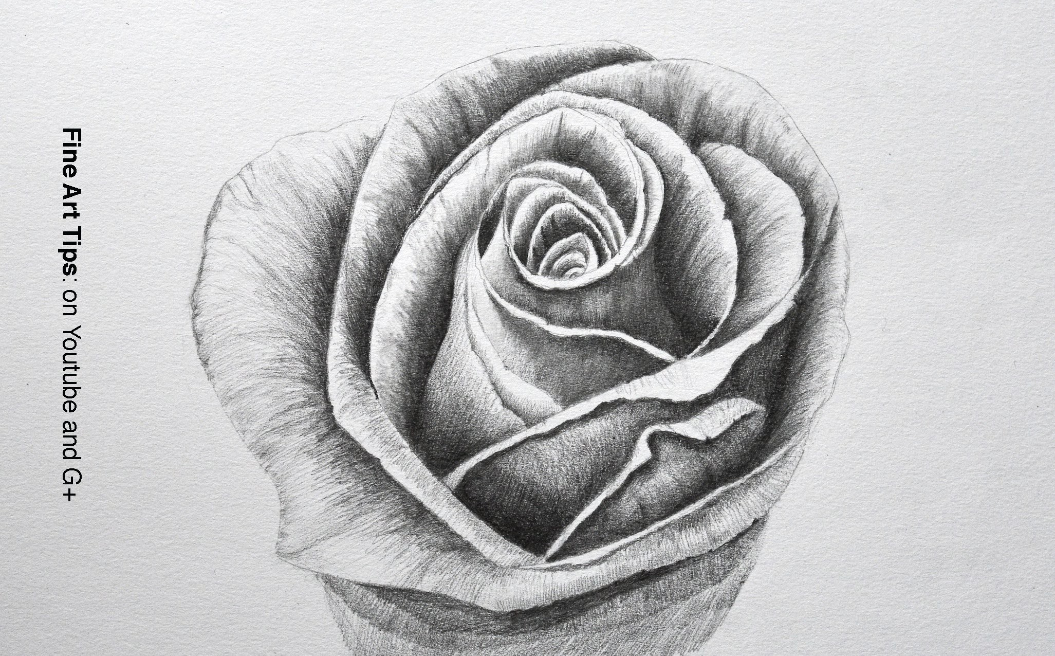 Drawing Flowers: How to Draw a Rose With Pencil - Fine Art-Tips.