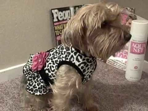 My yorkie has more outfits than yours.