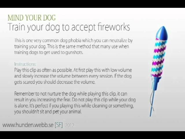 Train your dog to accept fireworks