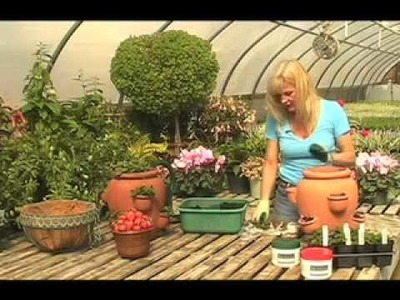 How to Plant a Strawberries in a Container (Strawberry Jar)